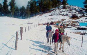 Horse riding at Kufri - Navbharat Tours