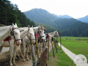 Khajjar Horse Riding - Navbharat Tours